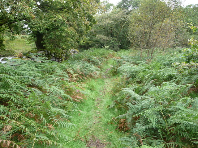 Woodland path in the Nanmor Valley