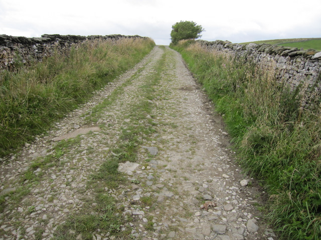 Moor Head Lane and a dead stoat