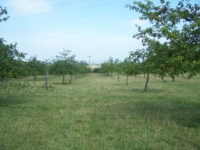 Orchard Footpath To Butleigh
