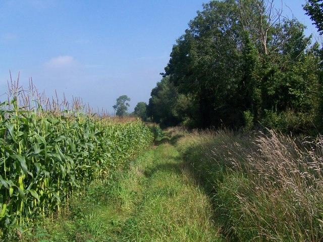 Footpath Near Butleigh