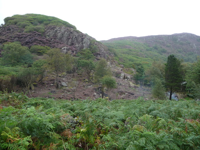 Removing Rhododendrons in Beddgelert