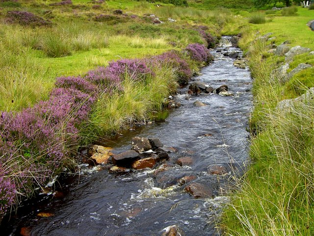Heather by the burn at Achosnich