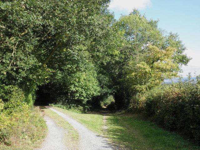 Bridleway to Little Birch