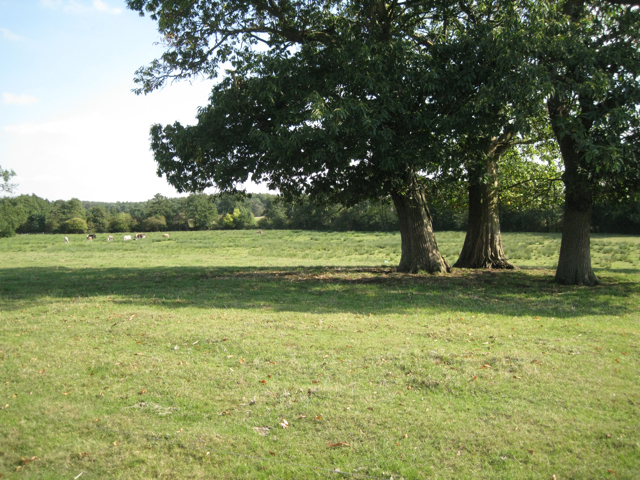 Three sweet chestnuts above a wet meadow