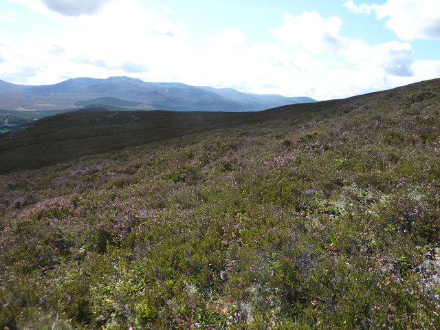 Heather moorland on the southern slopes of Carn Moine an Tighearn
