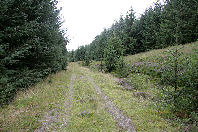 A forestry road between Tippet Knowe and Fellard