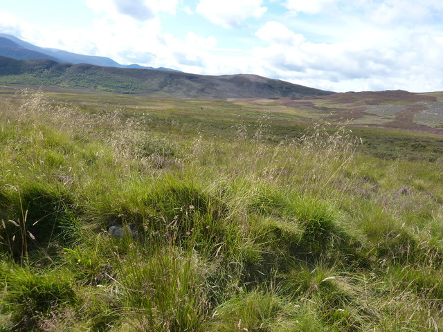 Large area of bog, including a lot of bog myrtle, which is not easy to walk through