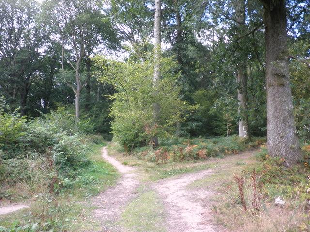 Footpath crossroads, Aconbury Woods