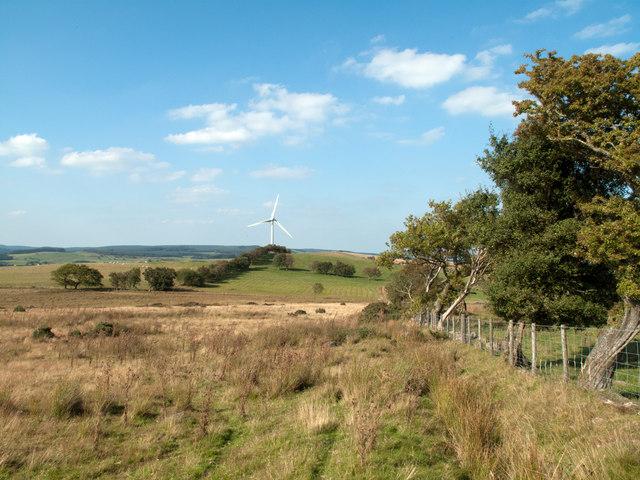 Rough grazing on Mynydd Rhyd ddu