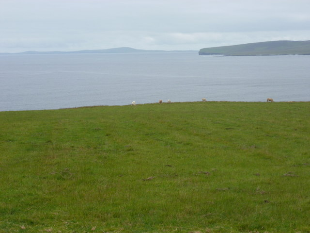Costa: grazing cattle and Westray view