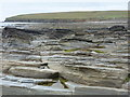 HY2428 : Birsay: rock strata and Brough of Birsay by Chris Downer