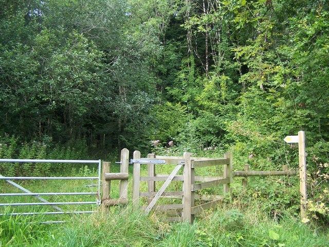 Path Through Harridge Wood