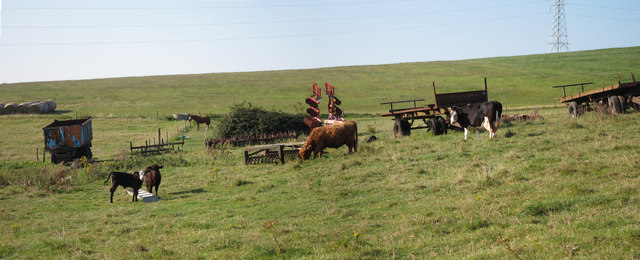 Cows and machinery at Mile Oak Farm
