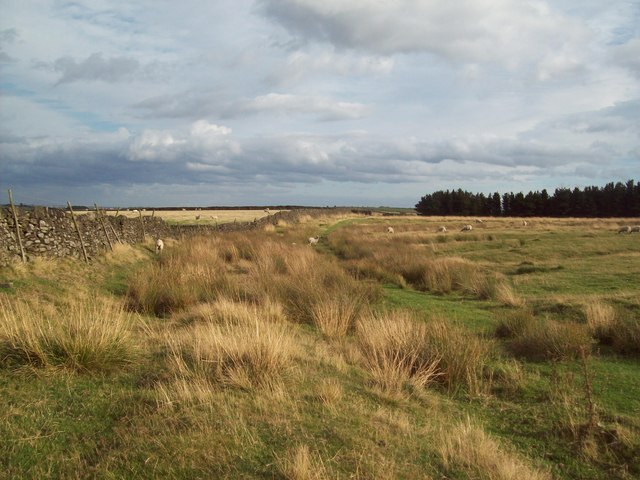 Footpath Skirting Rod Moor