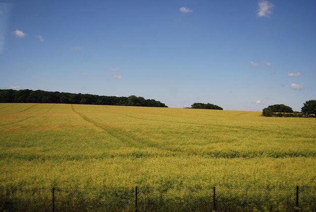 Wheat field near Spring Close
