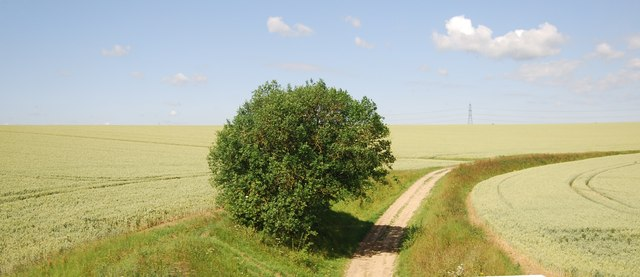 Tree by a byway