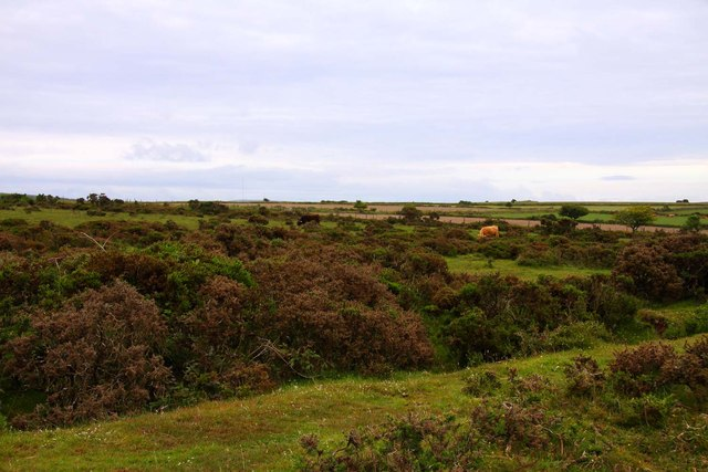 Gorse covered Redhill Downs