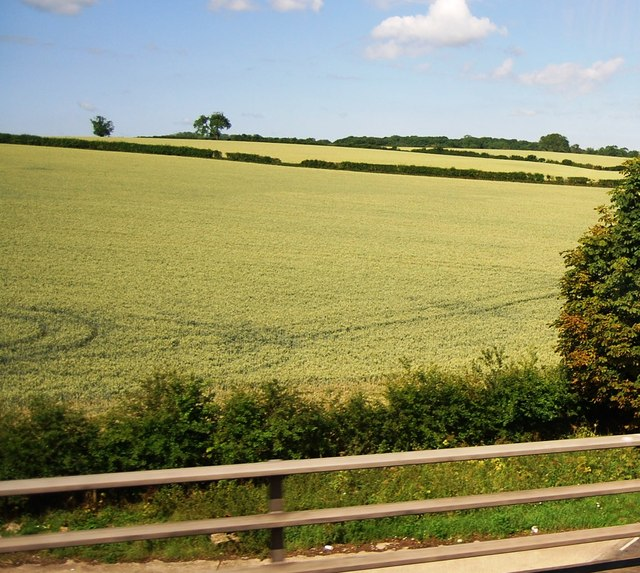 Wheat field by the M11