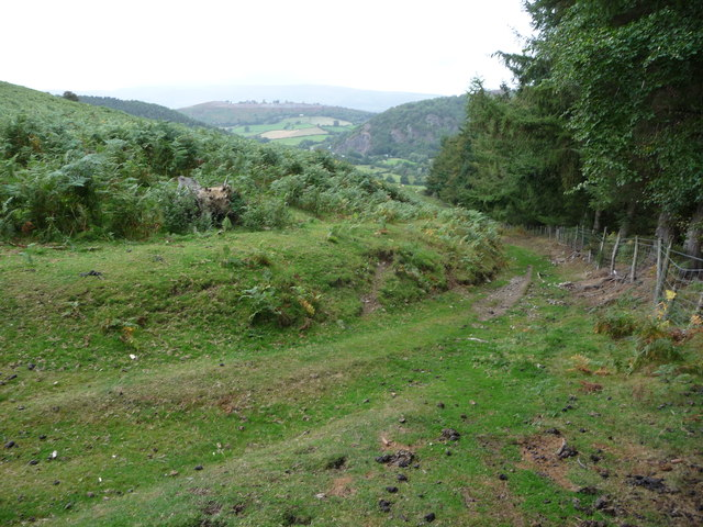 Track descending Hergest Ridge near Birchen Coppice