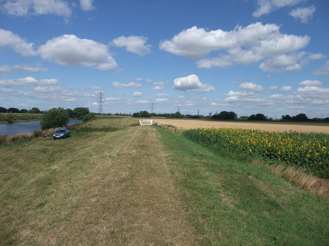 Sunflowers and a 'Clapper Gate' on the Trent Valley Way