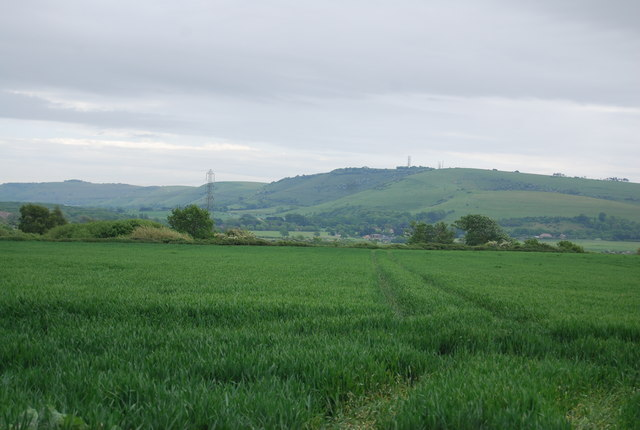 The South Downs across a cereal field