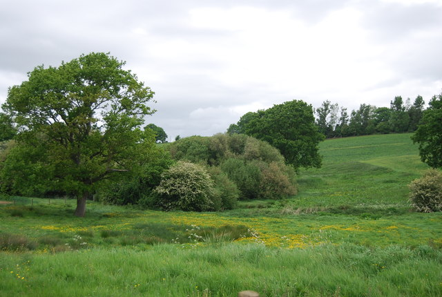 Small woodland, Wyckham Dale Farm