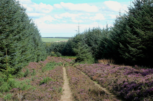 Track in Hen Toe Burn Wood