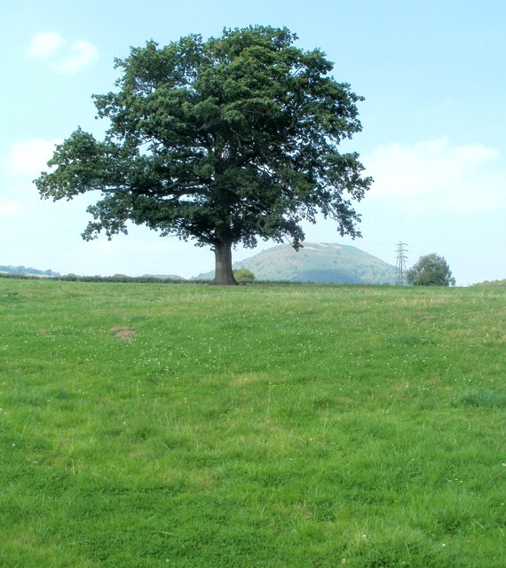 Tree and a distant view of Bryn Arw from a road west of Triley Mill