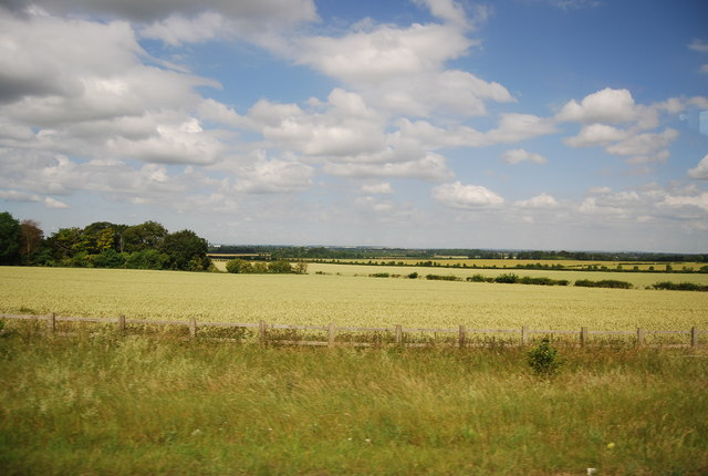 Wheat field by the A11