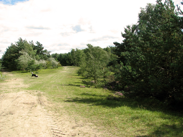 Paths along the lake in Bawsey Country Park