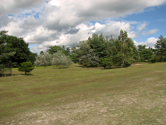 Clusters of trees, Bawsey Country Park
