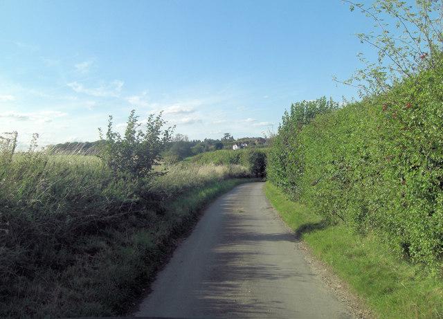 Lane south of Growcroft Copse