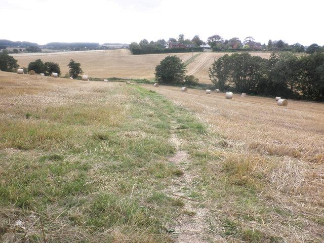 Fields of stubble, near Bullinghope