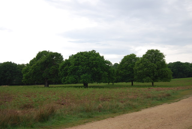 Trees in Richmond Park