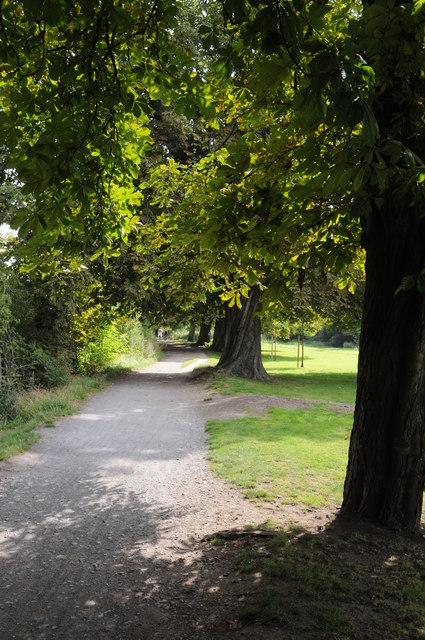 Chestnut trees in Hurst Park