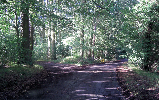 Track to Wood Farm