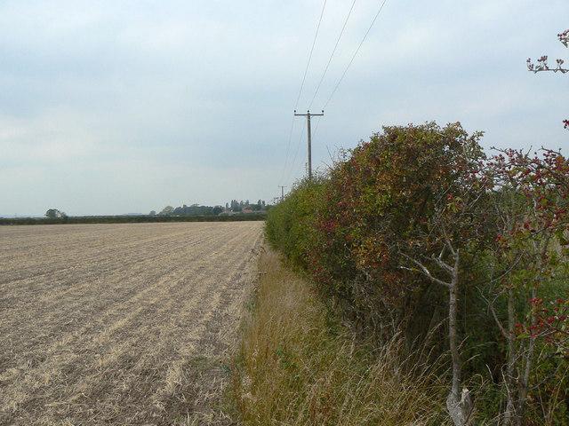 Hedgerow alongside Cropwell Lane