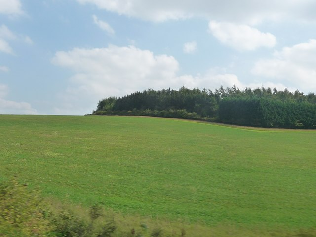 West Berkshire : Grassy Hillside