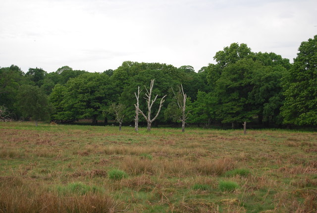 Dead trees, Richmond Park