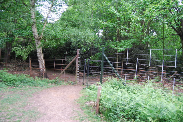 Gate and deer proof fence, Sidmouth Woods, Richmond Park