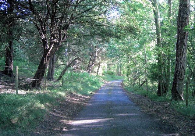 The lane inside Rottendown Hill Plantation