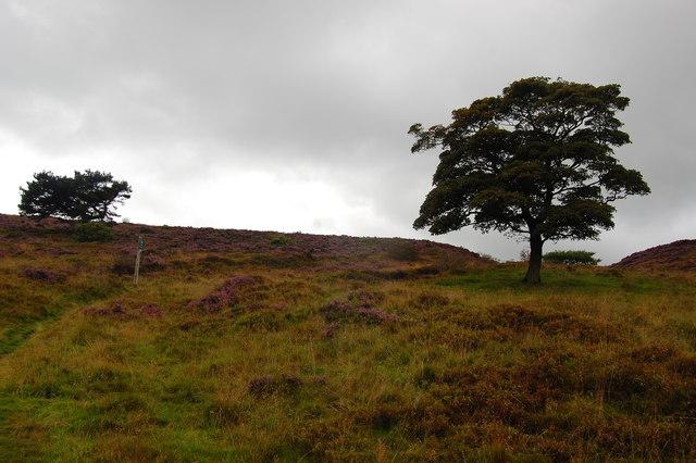 Footpath on Taxal Moor