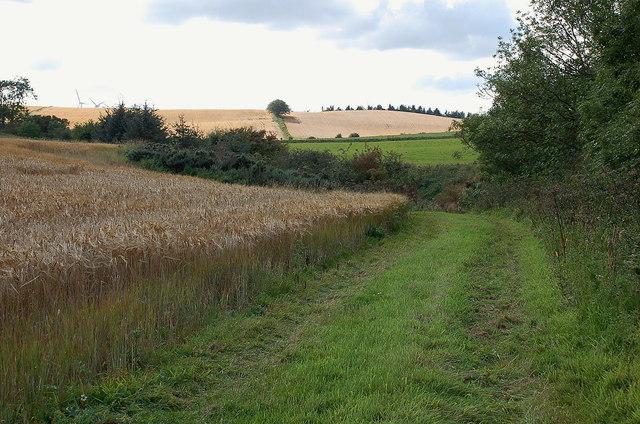 Field of barley, Knock