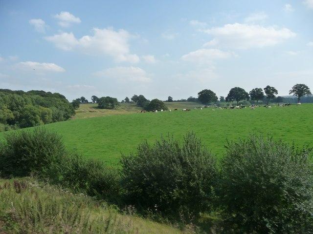 Kennet : Field of Cows