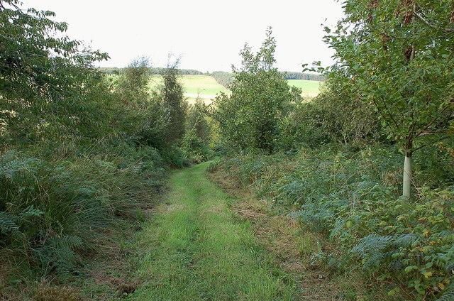 Path in Birkenside Dean