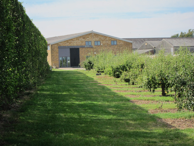 Pear orchard and packing station at Brogdale Farm