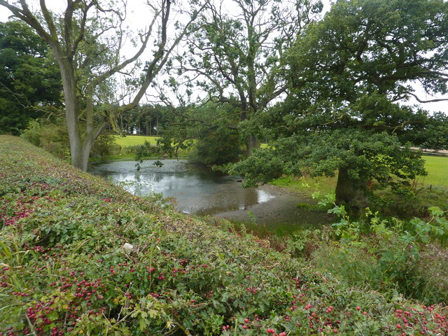 Small pond, Moor Lane, Osmaston