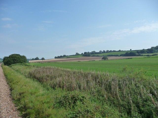 West Berkshire : Grassy Field