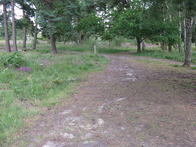 Tracks and paths on Iping Common