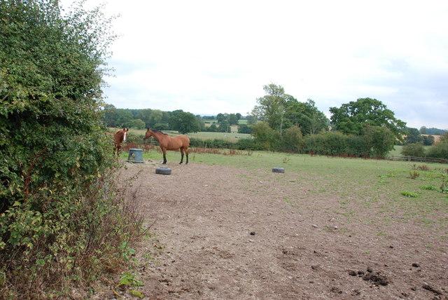 Horse Pasture near High Hall, Blymhill